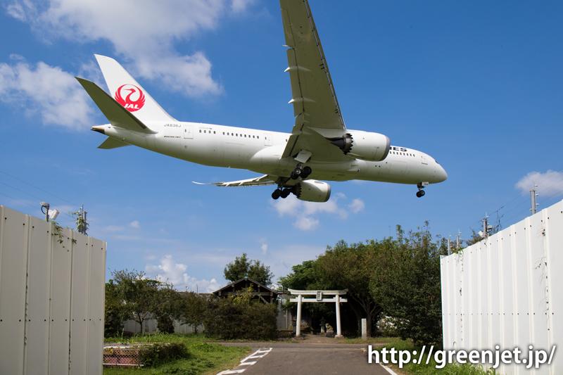成田 東峰神社にて JAL ボーイング787-8 Dreamliner