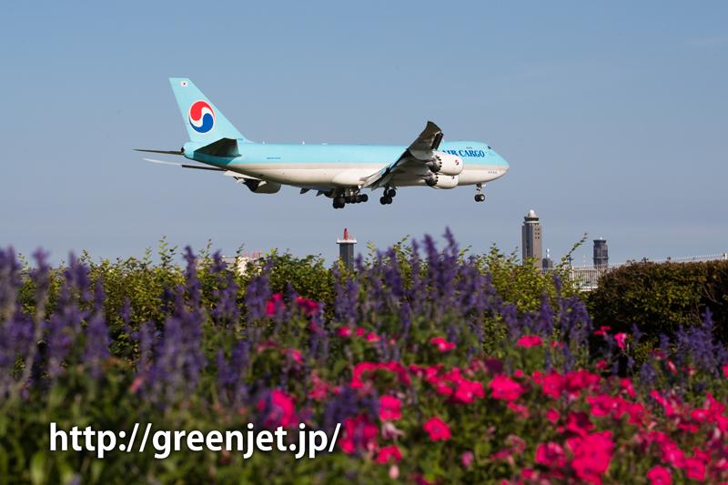 成田 桜の山にて 大韓航空 ボーイング747-8B5F/SCD