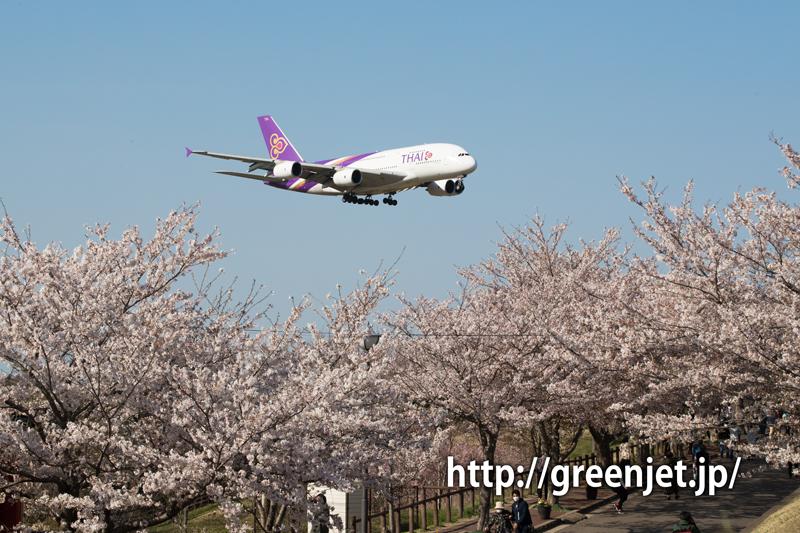 さくらの山 タイ国際航空 エアバス A380-841