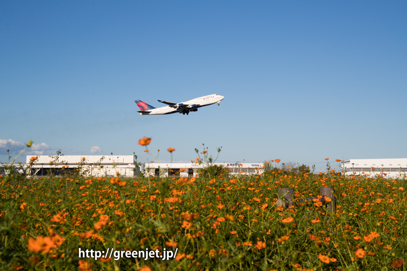 成田 オレンジコスモスとデルタ航空のボーイング747