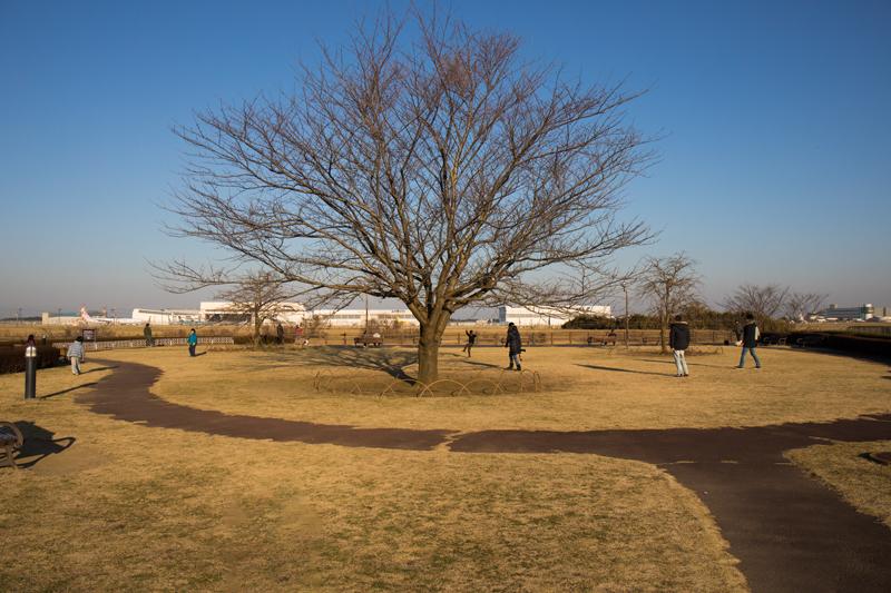 三里塚さくらの丘の展望広場