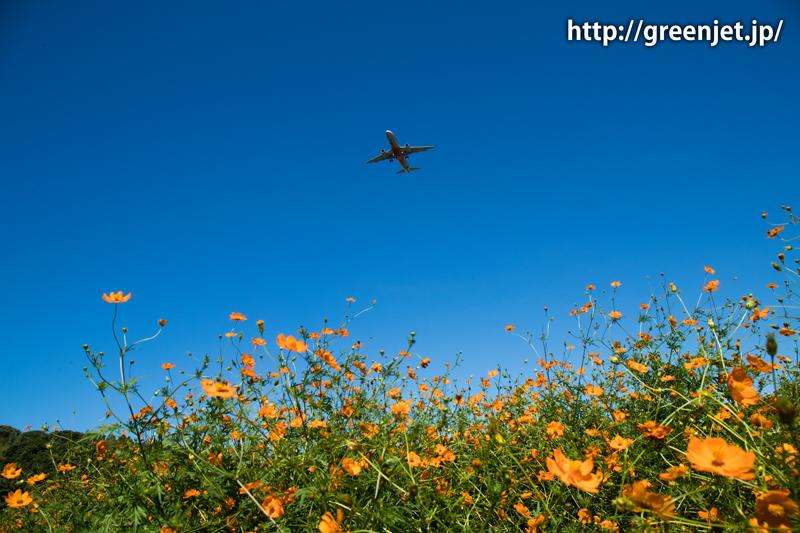 【成田の飛行機撮影スポット】小菅橋@ジェットスターのA320