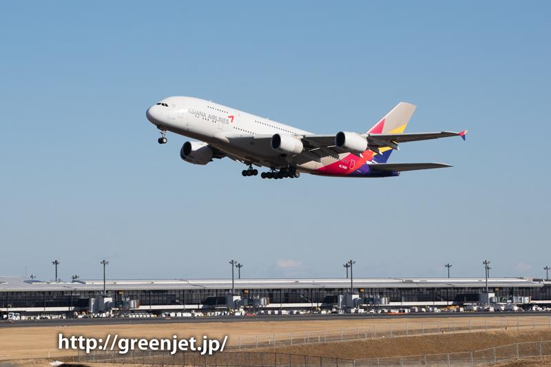 【成田の飛行機撮影スポット】奥の細道@アシアナのA380