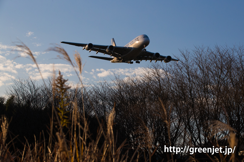【成田の飛行機撮影スポット】芝山水辺の里 シンガポール航空のエアバスA380