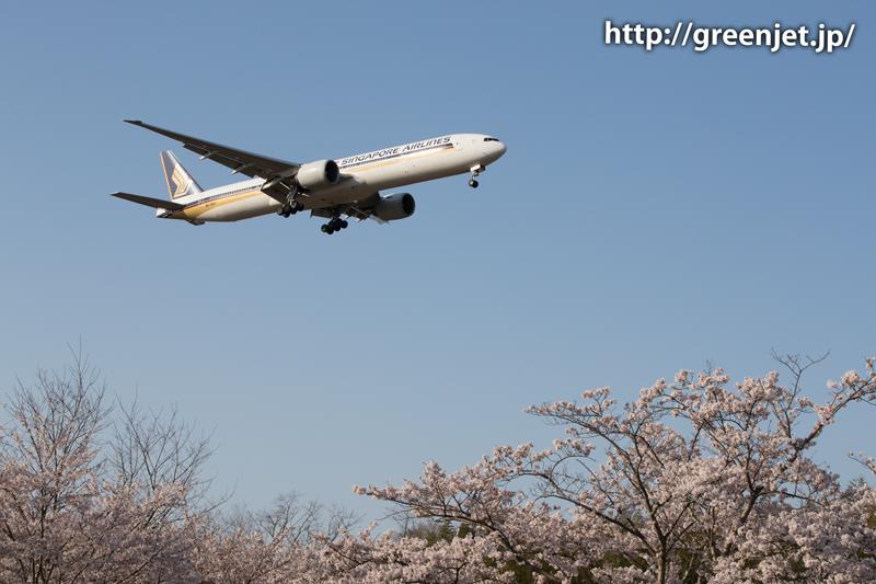シンガポール航空のB777@桜満開の芝山水辺の里