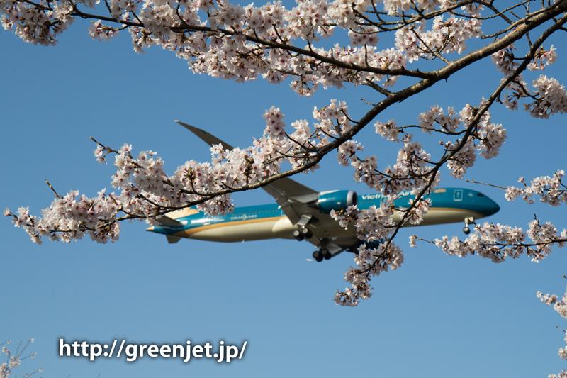 ベトナム航空のB787@桜満開の芝山水辺の里