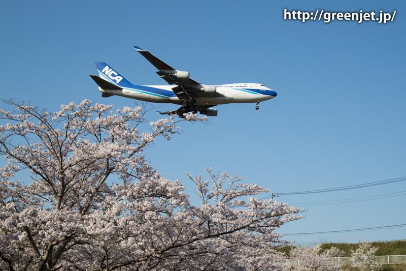 NCAのB747@桜満開の芝山水辺の里