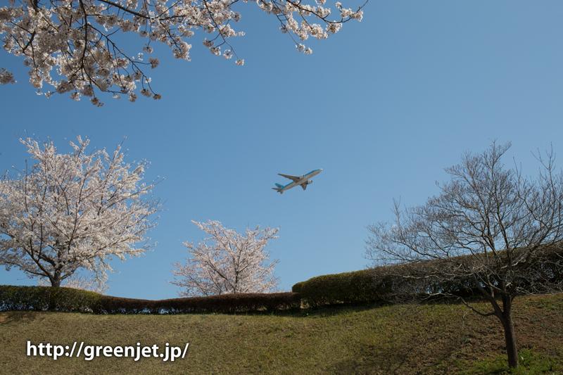 大韓航空のB777@桜満開のさくらの丘