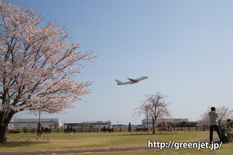 アトラスの白ジャンボ@桜満開のさくらの丘