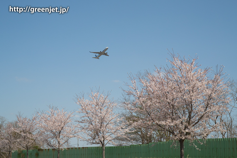 ANAのB737@桜満開のさくらの丘
