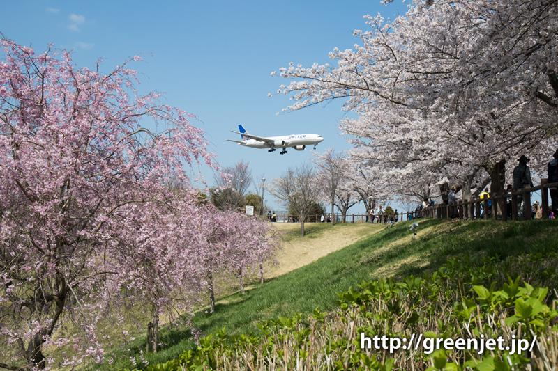 ユナイテッドのB787@桜満開のさくらの山