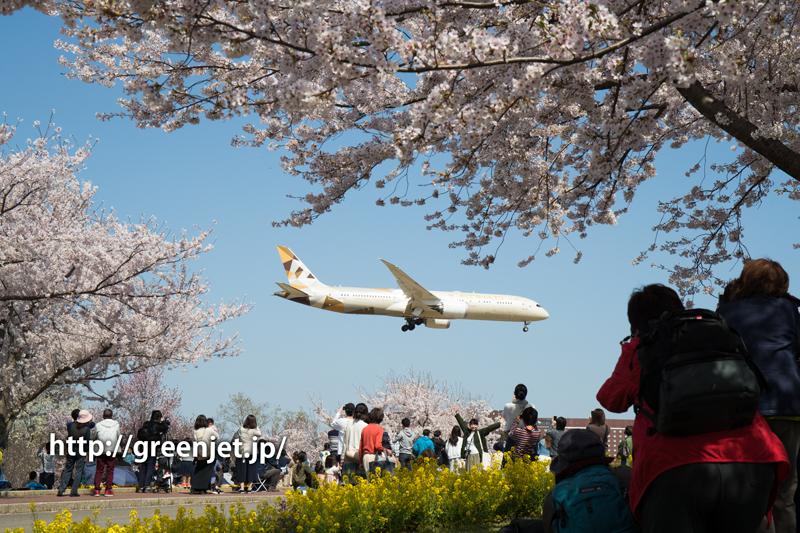 エティハドのB787@桜満開のさくらの山