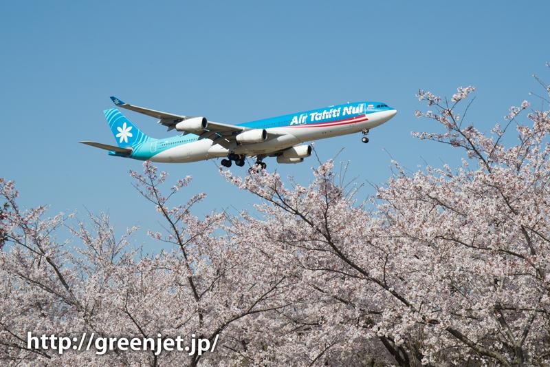 エア タヒチ ヌイのA340@桜満開のさくらの山