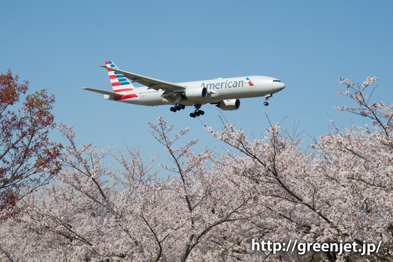 アメリカン航空のB777@桜満開のさくらの山