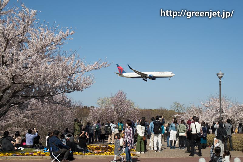 デルタのB767@桜満開のさくらの山