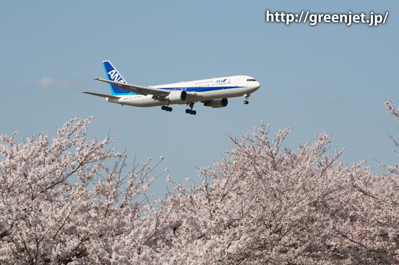 ANAのB767@桜満開のさくらの山