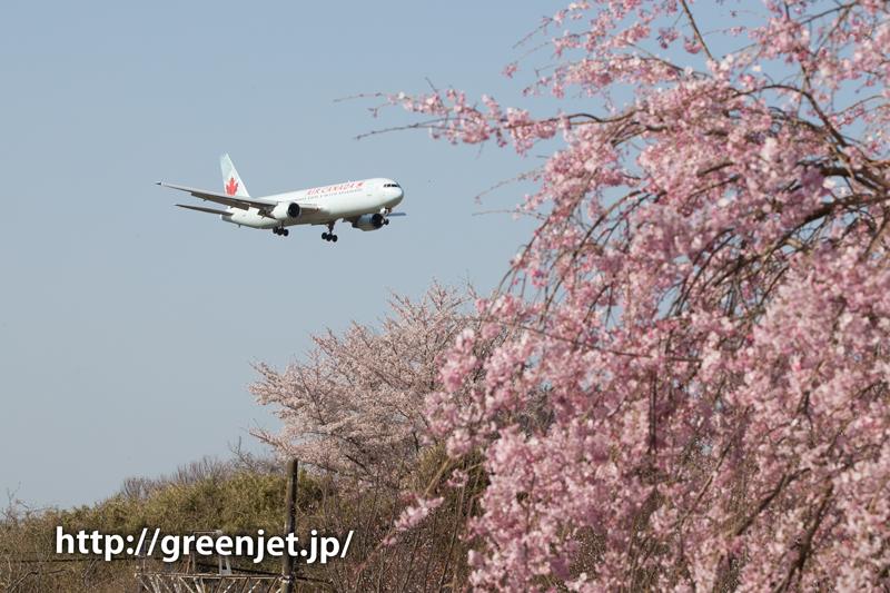 エア・カナダのB767@桜満開のさくらの山
