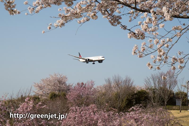 エア・カナダのB787@桜満開のさくらの山
