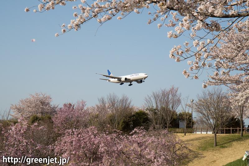ユナイテッド航空のB777@桜満開のさくらの山