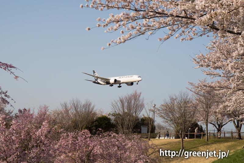 ニュージーランド航空のB787@桜満開のさくらの山