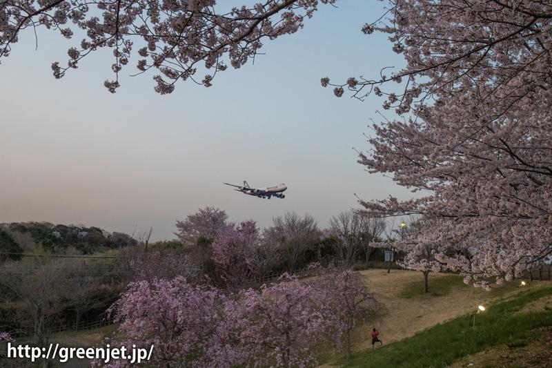 NCAのジャンボ@桜満開のさくらの山