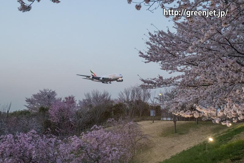 エミレーツのA380@桜満開のさくらの山