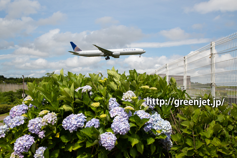 紫陽花とユナイテッド航空のボーイング777