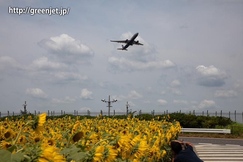 飛行機と向日葵/アエロフロートのA330