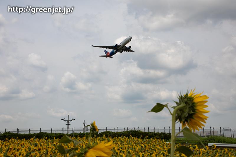 飛行機と向日葵/エアカランのA330