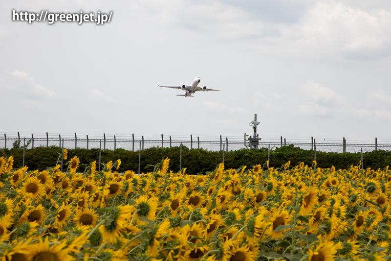 飛行機と向日葵/タイのA350
