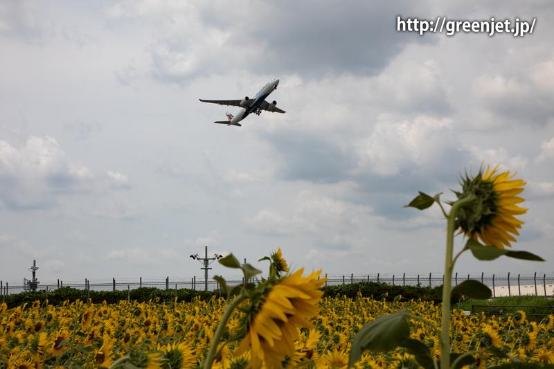 飛行機と向日葵/スリランカ航空のA330
