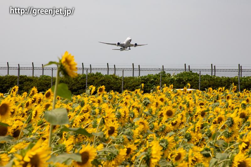 飛行機と向日葵/アエロメヒコのB787