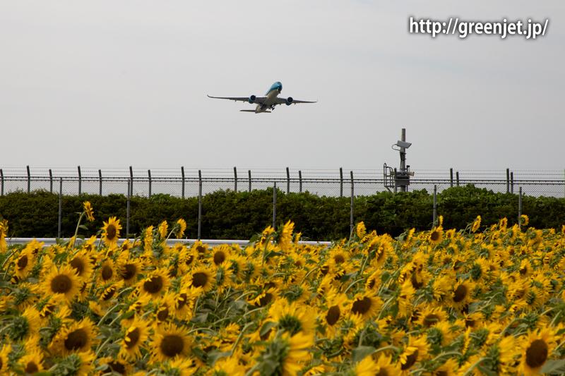 飛行機と向日葵/ベトナム航空のA350