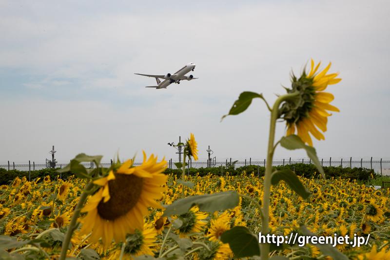 飛行機と向日葵/シンガポール航空のB787-10