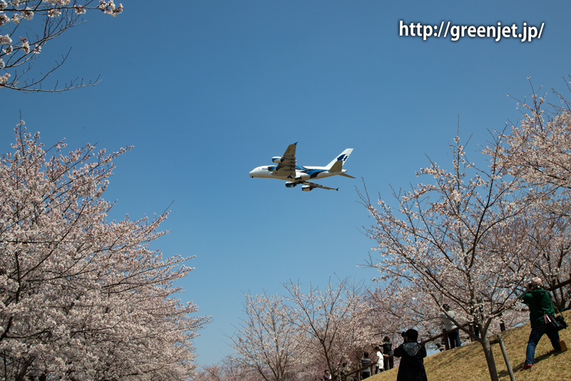 満開の桜!さくらの山にて~マレーシアのA380