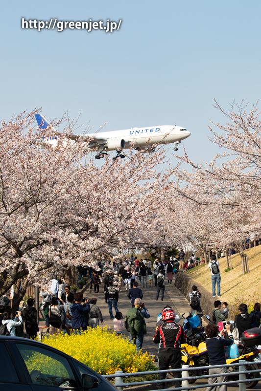 さくらの山上空に進入する飛行機と桜