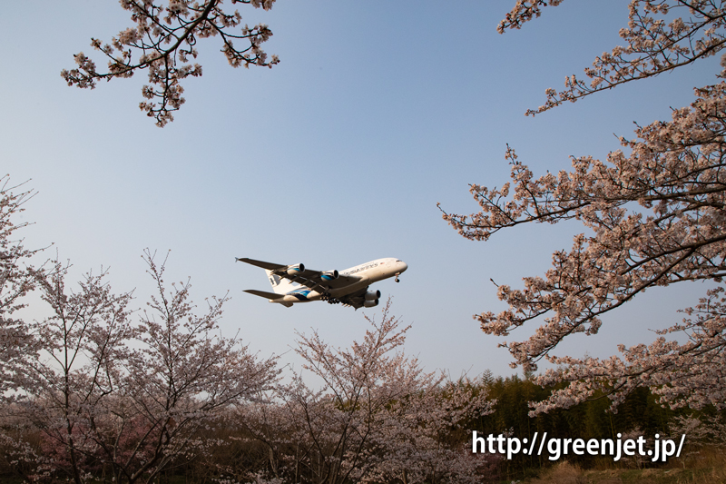 満開の成田の桜と飛行機の写真