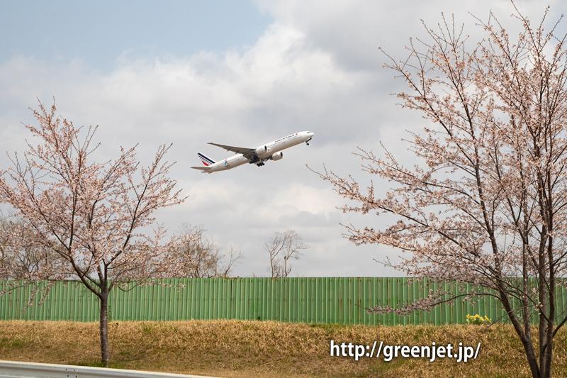 さくらの丘近くの路上で捉える桜と飛行機