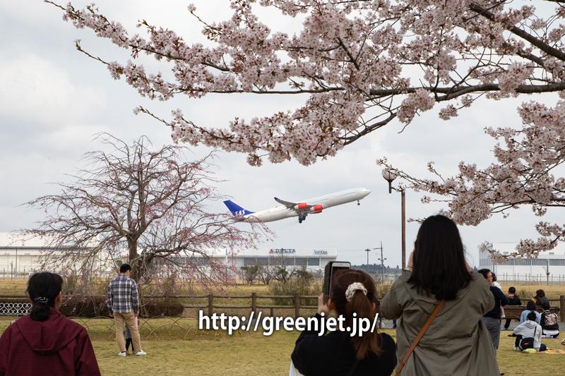 さくらの丘で捉える桜と飛行機