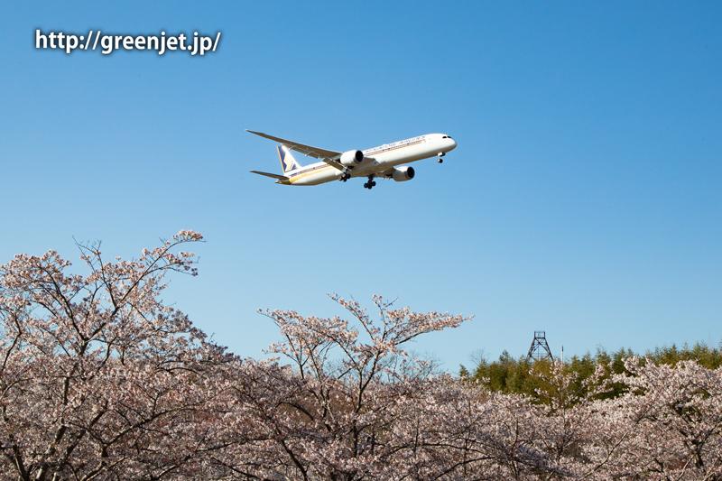 芝山水辺の里で撮る桜と飛行機