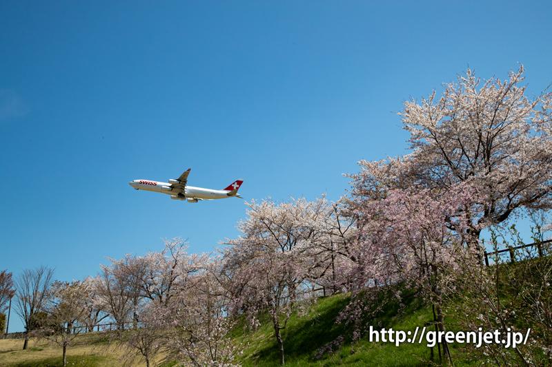 さくらの谷で飛行機写真
