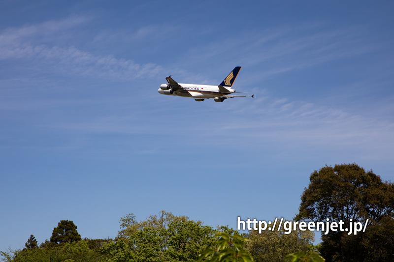 鯉のぼりと飛行機~シンガポールのA380