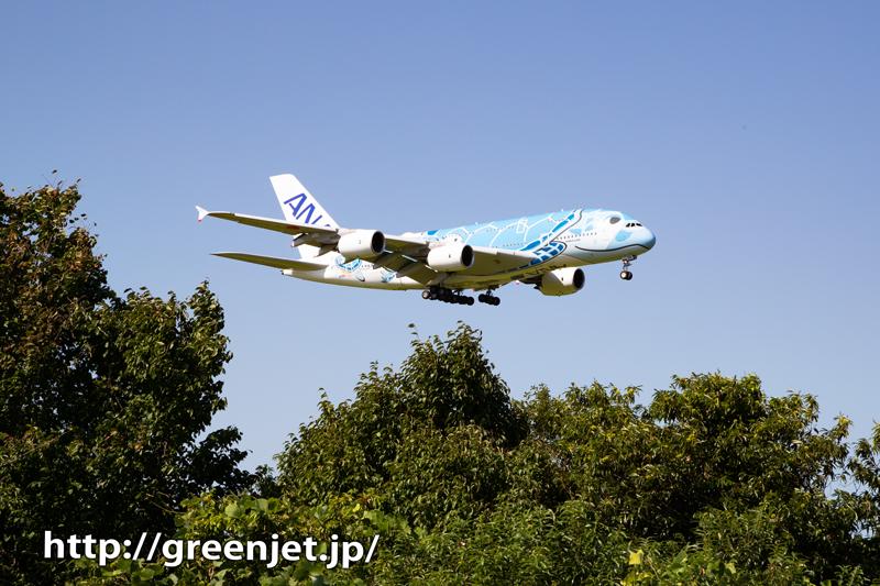 ANA フライングホヌ1号機と京成線。。
