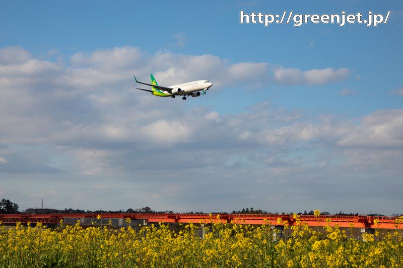 菜の花と飛行機写真を野球場ポイントで