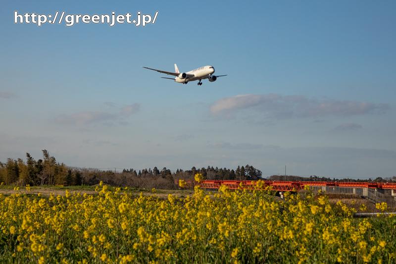 続!菜の花と飛行機写真を野球場ポイントで