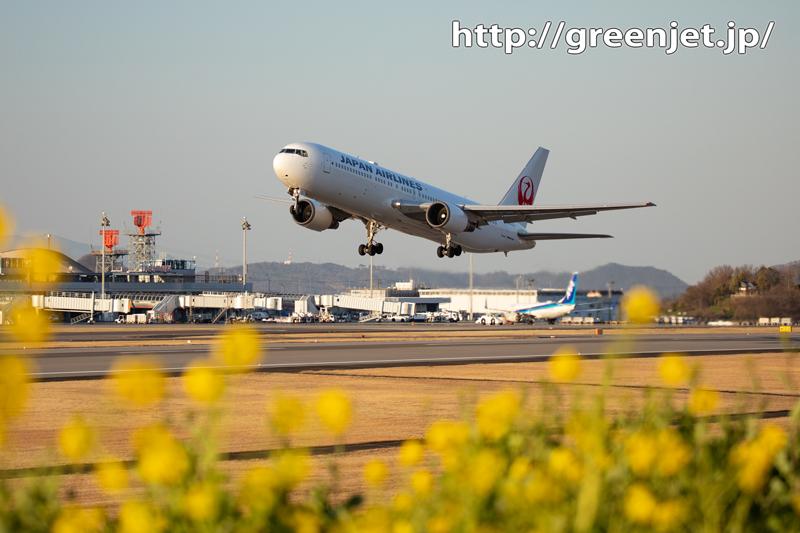 菜の花と飛行機@高松~その3