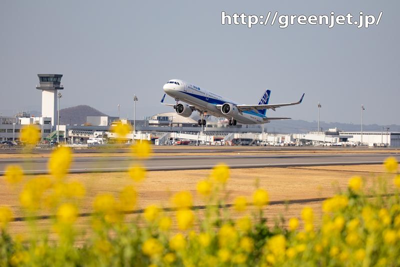 菜の花と飛行機@高松~その2