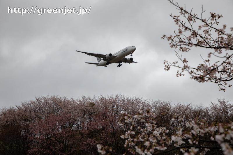 2020年~成田の桜と飛行機は雨模様
