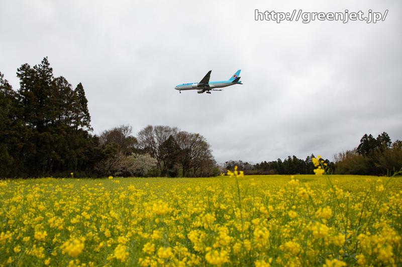 2020年春の菜の花と飛行機@成田①