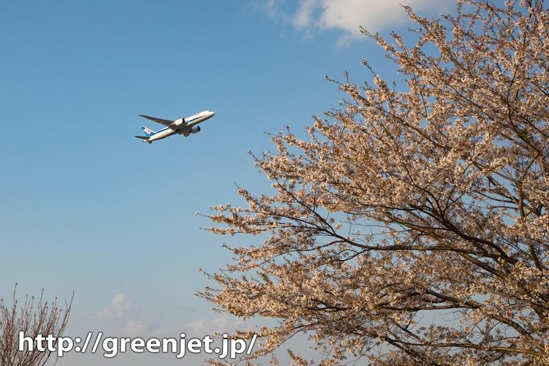 2020年 成田の桜と飛行機写真は控えめ